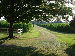 the farm 027