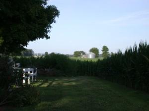 the farm 012