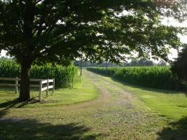 the farm 026